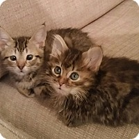 Adopt A Pet :: Wilson - Monroe, NC