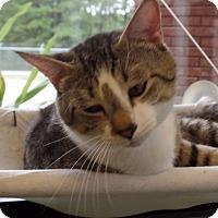Adopt A Pet :: George - Gadsden, AL