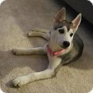 Adopt A Pet :: Skylar - Adoption Pending - Congrats Dowlings