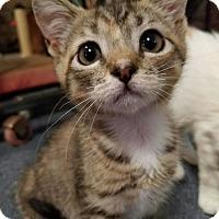 Adopt A Pet :: Gidget - Wilmington, NC