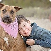 Boxer/Black Mouth Cur Mix Dog for adoption in Phoenix, Arizona - Pendy