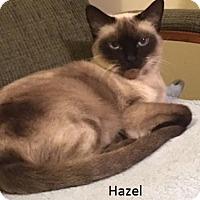 Adopt A Pet :: Hazel & Henry - Pinckney, MI