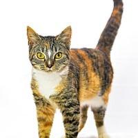 Adopt A Pet :: Joy - Oxford, MS