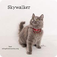 Adopt A Pet :: Skywalker - Riverside, CA