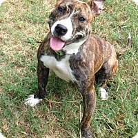 Adopt A Pet :: Demi - Union City, TN