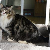 Adopt A Pet :: Trapper - Gardnerville, NV