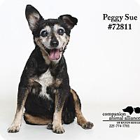 Adopt A Pet :: Betty Sue - Baton Rouge, LA