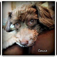 Adopt A Pet :: Cammie - Pascagoula, MS