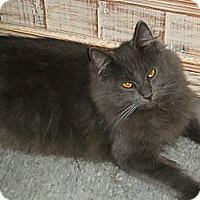 Adopt A Pet :: Thor - Brea, CA