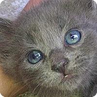 Adopt A Pet :: Jean Claw Van Damme - Silver Lake, WI
