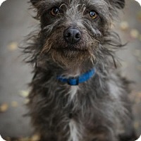 Adopt A Pet :: Kollie - Fresno, CA