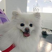 Adopt A Pet :: Audrey Sophia - Irvine, CA