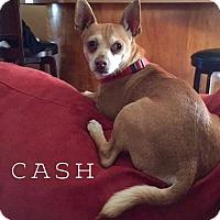Adopt A Pet :: Cash - La Verne, CA