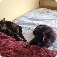 Adopt A Pet :: Sarah Wilson - Chambersburg, PA