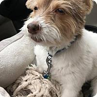 Adopt A Pet :: Ladie - North Olmsted, OH