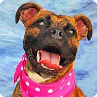 Adopt A Pet :: ANA - Louisville, KY