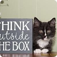 Adopt A Pet :: AJ - Little Rock, AR