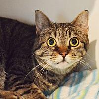 Adopt A Pet :: Freddie - Lincoln, NE