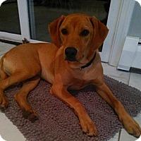 Adopt A Pet :: Cooper *LOCAL*(aka Friedrich Von Trapp) - Wakefield, RI