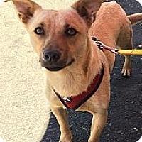 Adopt A Pet :: Sadie - Oakdale, CA