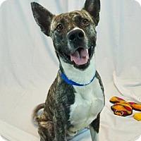 Adopt A Pet :: Levi - New Orleans, LA