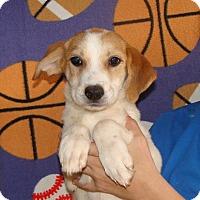 Adopt A Pet :: Storm - Oviedo, FL