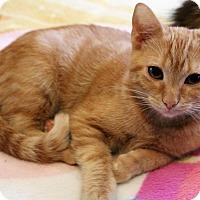 Adopt A Pet :: Ginny - Wichita, KS