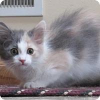Adopt A Pet :: Camellia - Williamston, MI