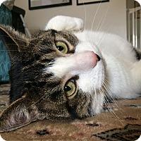 Adopt A Pet :: Steve - Toronto, ON