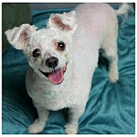 Adopt A Pet :: Queenie - Forked River, NJ