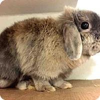 Adopt A Pet :: WAFFLE - Brooklyn, NY
