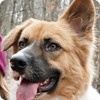 Adopt A Pet :: Frank - Bedford Hills, NY