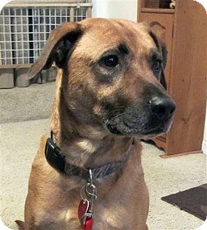 Dogs To Adopt In Grand Rapids Michigan