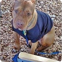 Adopt A Pet :: Noble - Orlando, FL