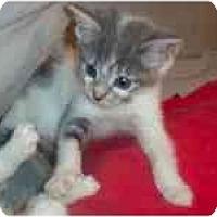 Adopt A Pet :: Darcy & Dominique - Arlington, VA