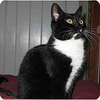 Adopt A Pet :: Katie - LUVbug - Cincinnati, OH