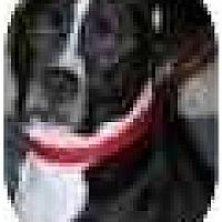 Adopt A Pet :: Louie; family dog - Sacramento, CA