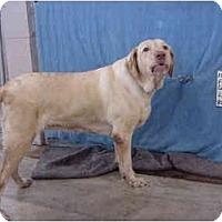 Adopt A Pet :: Loretta/Pending - Zanesville, OH