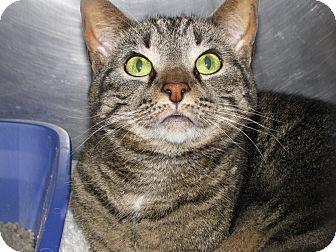 Katie Declawed Adopted Cat 29391 Voorhees Nj