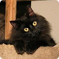 Adopt A Pet :: Kringle - Milford, MA