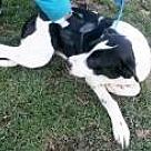 Adopt A Pet :: charlotte