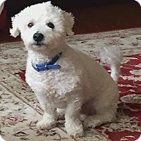Adopt A Pet :: SHEA - East Hanover, NJ