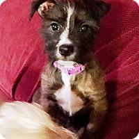 Adopt A Pet :: Libby - Huntsville, TN