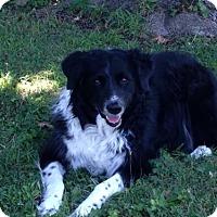 Adopt A Pet :: Duncan ***CROSS POSTING*** - Dillsburg, PA