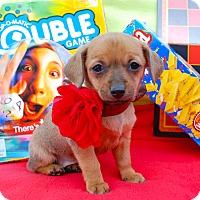 Adopt A Pet :: Trouble - Irvine, CA