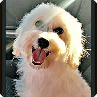 Adopt A Pet :: Jacks - Rancho Cucamonga, CA