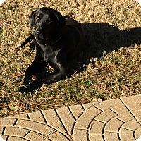 Adopt A Pet :: Vader - Alpharetta, GA