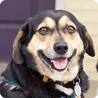 Adopt A Pet :: Charlie - Huntsville, AL