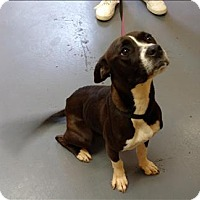 Adopt A Pet :: 16-05-1430 Clarice - Dallas, GA