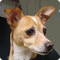 Adopt A Pet :: Peggy - Erwin, TN